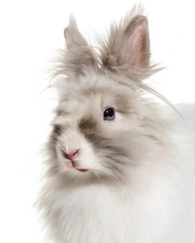 konijnentrimsalon