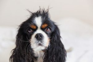 Dog with messy hair